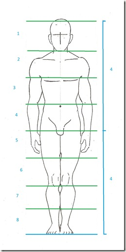 proportions corps homme