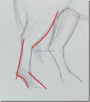lignes droite et courbe pattes