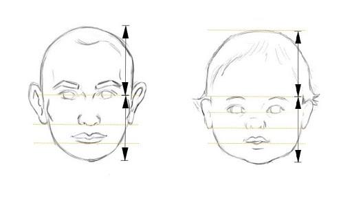 proportions d'un visage d'enfant