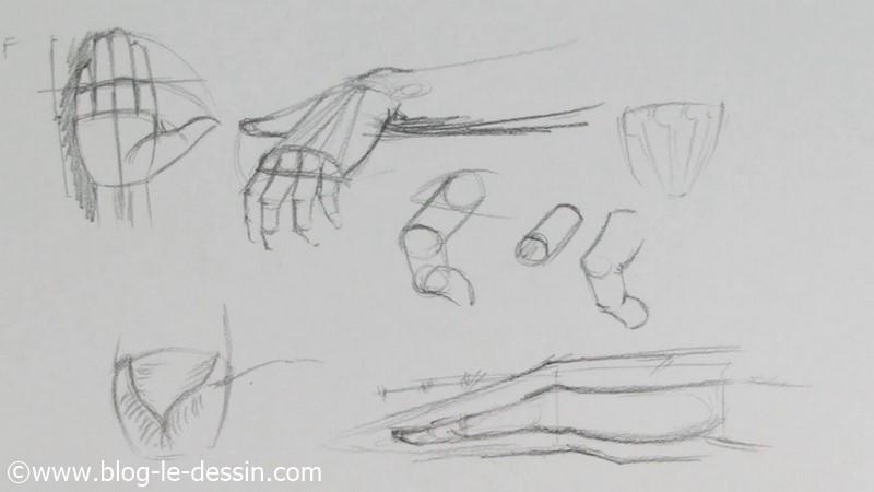 proportions schémas dessiné mains doigts anatomie muscle