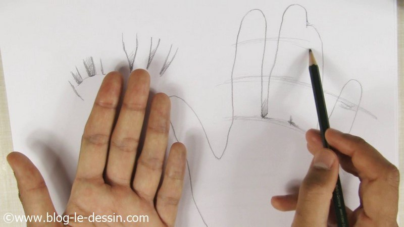 courbes phalanges tracer position anatomie