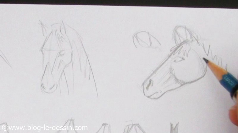 Faire le dessin d 39 une t te de cheval facilement - Tete de cheval dessin ...