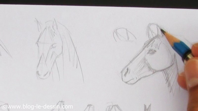 Faire le dessin d 39 une t te de cheval facilement - Dessin cheval facile faire ...