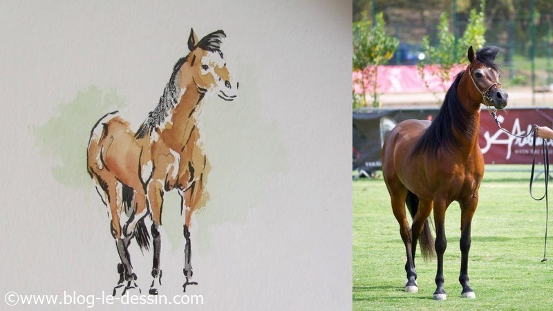 dessin final illustration article cheval esquisse aquarelle