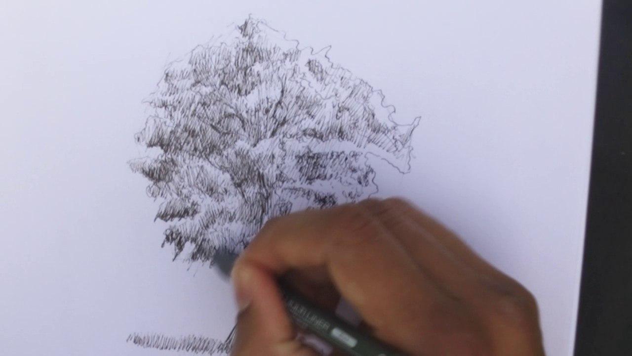 patience dessin arbre finitions details feuillage