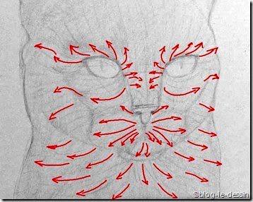 esquisser les poils des chats