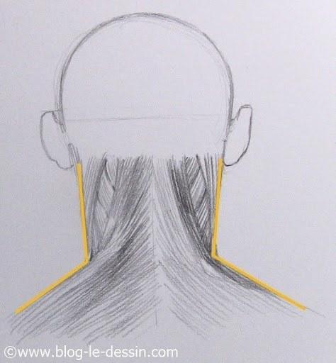 comment dessiner un cou
