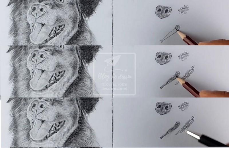 dessiner les gencives d'un chien