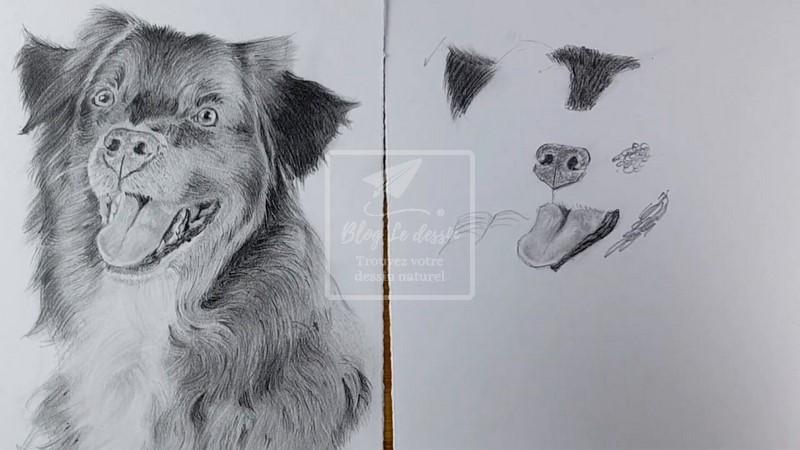 dessiner un chien réaliste
