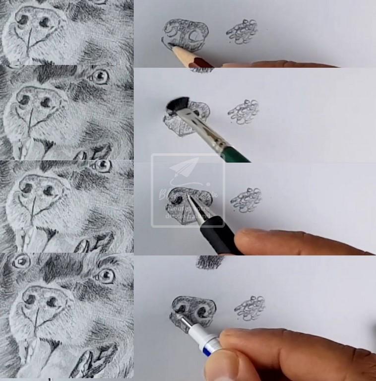 dessiner le museau d'un chien réaliste