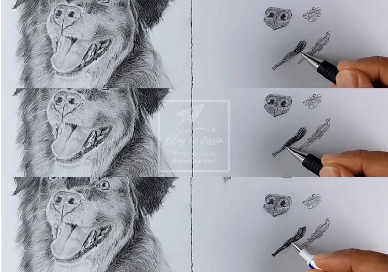 dessiner un portrait de chien réaliste